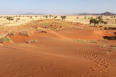 rote Dünen und gelbes Gras im NamibRand Nature Reserve, Family Hideout, Namibia