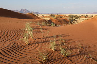 Dünen und Struktur im NamibRand Nature Reserve, Family Hideout, Namibia
