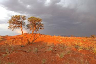 Gewitter über den Dünen des NamibRand Nature Reserve, Family Hideout, Namibia