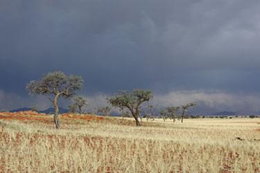 abendliches Gewitter im NamibRand Nature Reserve, Family Hideout, Namibia