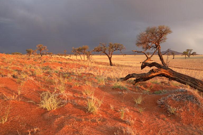 Gewitterstimmung im NamibRand Nature Reserve, Family Hideout, Namibia