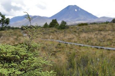 Blick über die Ebene zum Tongariro, Neuseeland