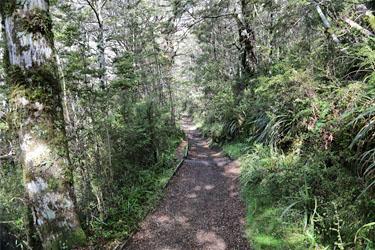 durch den Wald zu den Waitonga Falls, Neuseeland