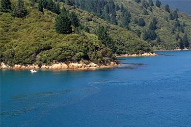 Landschaft während der Überfahrt mit der Interislander-Fähre Wellington nach Picton, Neuseeland