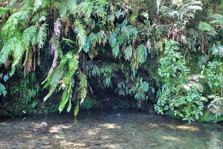 an den Elvy Waterfalls, Pelorus Bridge, Neuseeland