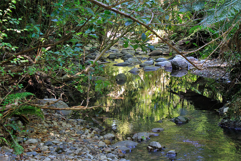 Spiegelung im Wasser, Elvy Waterfalls, Pelorus Bridge, Neuseeland