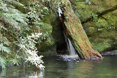 Elvy Wasserfall an der Pelorus Bridge, Neuseeland