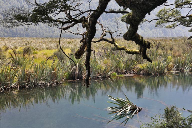 mirror lakes, milford sound, te anau, neuseeland