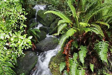 farn und wSSERFAELLCHEN; MILFORD Sfarn und wasserfaellchen, milford sound, neuseeland