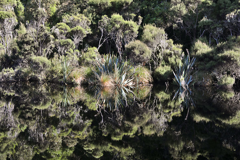 lake wilkie, catlins, neuseeland