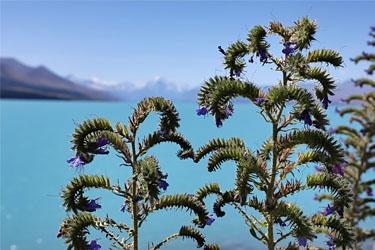 blick über den lake pukaki zum aoraki mt. cook, neuseeland