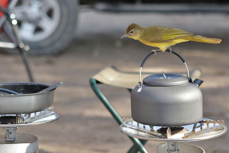 frühstück auf der campsite, maun rest camp, botswana